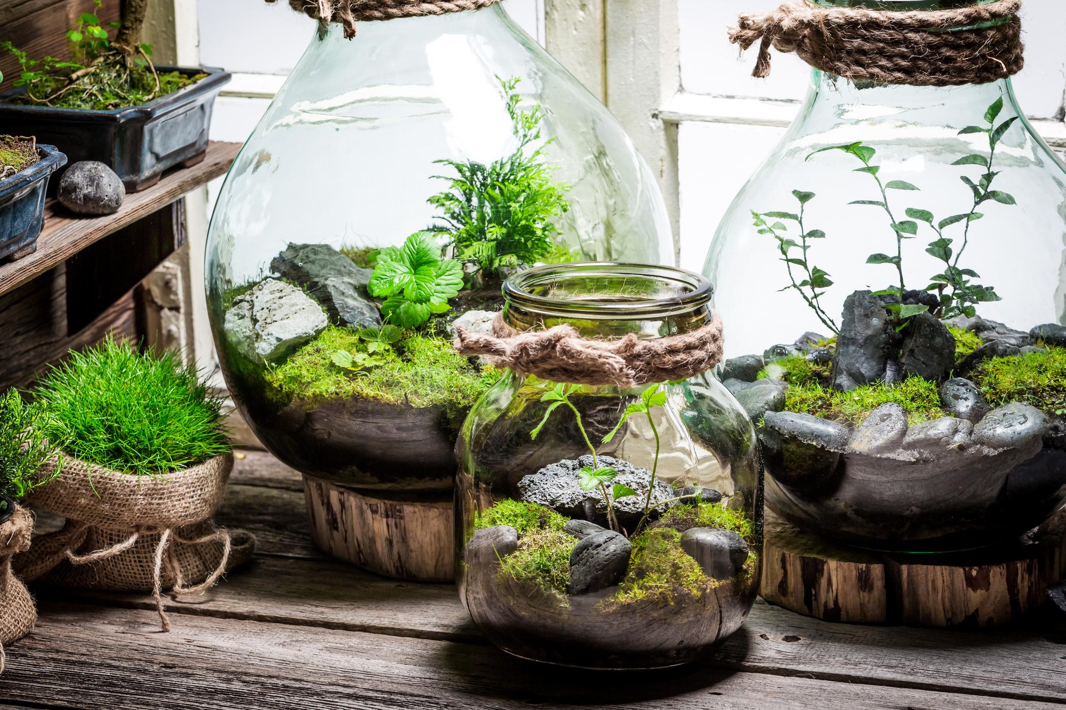 Mały las za szkłem Image